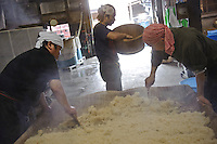 Workers prepare steamed rice, Terada Honke sake brewery, Kozaki, Chiba Prefecture, Japan, June 15, 2009. Terada Honke sake brewery has been brewing sake in the town of Ozaki since 1673. They make sake using organic rice, natural sake yeast, and traditional sake brewing methods.