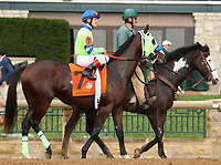 "October 07, 2018 : #7 The Sicarii and jockey Jon Court  in the 1st running of The Indian Summer $200,000 ""Win and You're In Breeders' CupJuvenile Turf Sprint Division"" for trainer Mark Casse and owner John Oxley  at Keeneland Race Course on October 07, 2018 in Lexington, KY.  Candice Chavez/ESW/CSM"