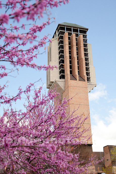 4/11/12 Pink and purple blooms frame the Zell Lurie Tower.