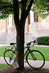 Bicycle leaning against tree in front of Court House.