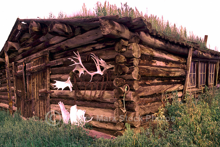 Carmacks, Yukon Territory, Canada - Prospector's Old Log Cabin with Sod and Grass Roof, Antlers hanging on Wall