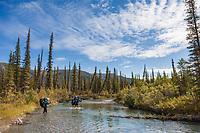 Hikers wade across a drainage of the Alatna River, Gates of the Arctic National Park, Alaska.