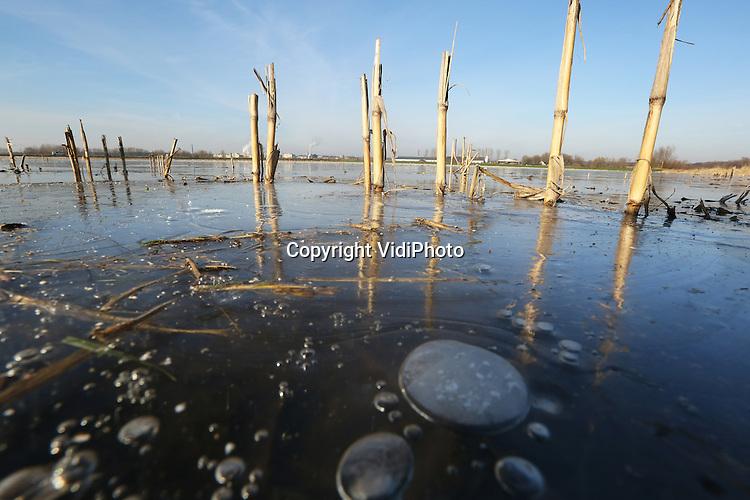 Foto: VidiPhoto<br /> <br /> DRIEL - Het stijgende rivierwater in de Rijn, in combinatie met de flinke regenval van de afgelopen weken, zorgt er voor dat delen van de uiterwaarden bij het Gelderse Driel onder water staan. Door de nachtvorst van de laatste dagen is dat veranderd in ijs. Slechts de stoppels van de in november geoogste ma&iuml;s zijn nog zichtbaar. De ijsvlakte is echter nog te broos om overheen te lopen, hoewel sommigen wel voorzichtig een poging wagen.