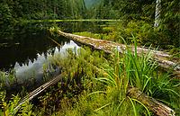 Lake and Forest, North Cascades National Park, Washington
