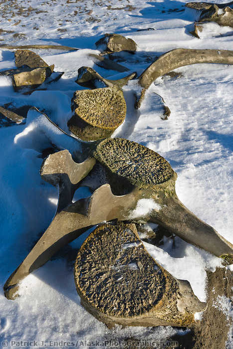 Bowhead whale bones on Barter Island, along the Beaufort Sea, Arctic, Alaska.