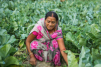 Vegetable farmer Rangila Devi, 35, a member of a Farmer's Producer Group, tends to her cauliflower plants in her farm in Machahi village, Muzaffarpur, Bihar, India on October 26th, 2016. Non-profit organisation Technoserve works with women vegetable farmers in Muzaffarpur, providing technical support in forward linkage, streamlining their business models and linking them directly to an international market through Electronic Trading Platforms. Photograph by Suzanne Lee for Technoserve