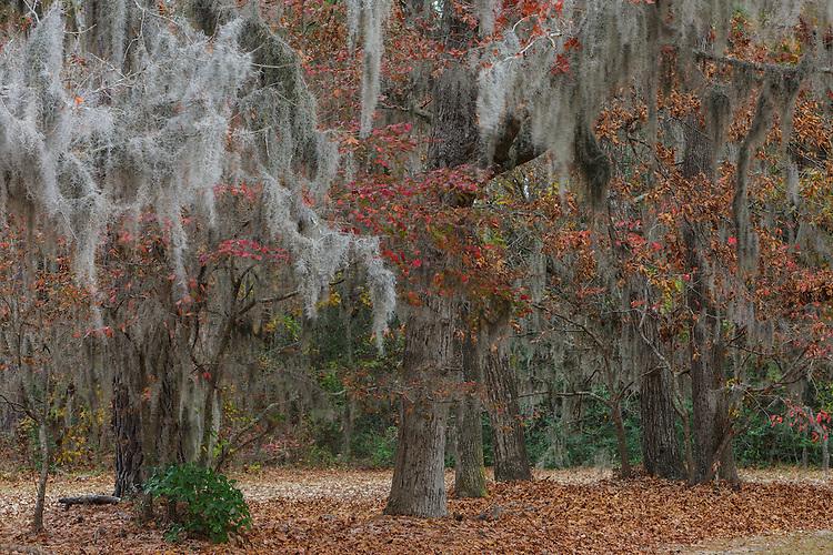 TREES IN SOUTH CAROLINA