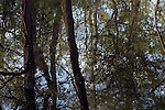 Reflections of trees in Lymington River, New Forest, Hampshire, UK