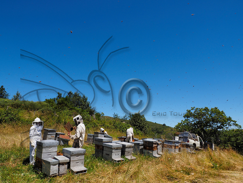 Summer inspection of an apiary in the mountains. On average, each hive is inspected every three weeks during the production of honey.<br /> Inspection d&rsquo;&eacute;t&eacute; dans un rucher de montagne. Chaque ruche est inspect&eacute;e en moyenne toute les trois semaines pendant la production de miel.