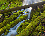 Willamette National Forest, OR  <br /> Spring run-off tumbles over the mossy logs of Upper Proxy falls