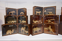 55th Art Biennale in Venice - The Encyclopedic Palace (Il Palazzo Enciclopedico).<br /> Giardini. International Pavilion.<br /> Levi Fisher Ames (U.S.A.). Wooden animal figurines.