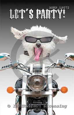 Samantha, ANIMALS,  photos,+dogs,++++,AUKPLP072,#A# Humor, lustig, divertido