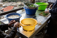 Mount Athos - The Holy Mountain.<br /> Monks help prepare the ingredients for dinner. Their diet mostly involves vegetables and sometimes fish, but rarely ever meat. <br /> Photographer: Rick Findler