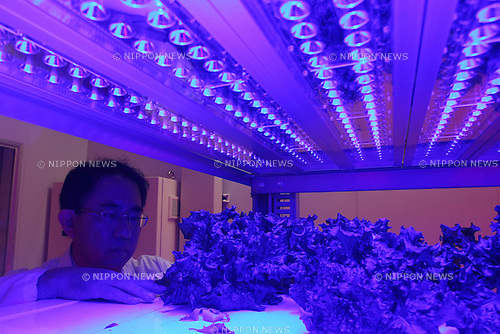 August 2, 2010 - Tokyo, Japan - Dr. Hiroyuki Watanabe, professor of Graduate School of Agriculture in Tamagawa University, looks at leaf lettuces in the LED-based Plant Factory housed in the research center in Tokyo, Japan on August 2, 2010. The full research facility, named Future Science Technology Center, has been operational since March 2010. The plant factory facility uses artificial lighting sources, such as Light-emitting Diodes (LEDs), Hybrid Electrode Fluorescent Lamps (HEFLs) and cool white fluorescent (CWF) lamps for plant production.
