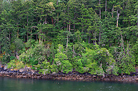 WASJ_D174 - USA, Washington, San Juan Islands, Shaw Island, Forest of Douglas fir with scattered Pacific madrone trees above rocky shoreline.