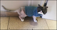 BNPS.co.uk (01202 558833)<br /> Pic: WellAnimalClinic/BNPS<br /> <br /> ***Please Use Full Byline***<br /> <br /> Matt the cat in a knitted jumper made for him to keep the cold out. <br /> <br /> Matt the cat has been given a new lease of life - after vets shaved off two carrier bags worth of fur.<br /> <br /> The mangy moggie was close to death when he was discovered abandoned in a box that had been dumped by the side of the road.<br /> <br /> After years of neglect his thick coat had grown so long it had become matted together and he was so sick he could barely muster the energy to eat.<br /> <br /> Horrified vets rushed the Persian cat onto the operating table where he was sedated - and as soon as he went under they set about removing all of his fur.