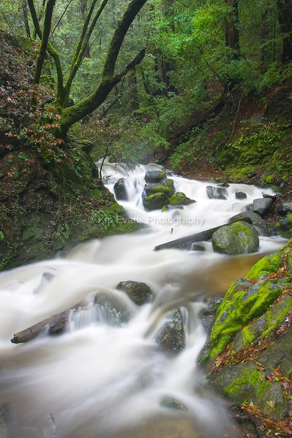 A creek flow down Palo Colorado Canyon - Big Sur, CA.