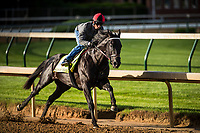 LOUISVILLE, KY - MAY 01: Sonneteer completes his final workout for the Kentucky Derby at Churchill Downs on May 01, 2017 in Louisville, Kentucky. (Photo by Alex Evers/Eclipse Sportswire/Getty Images)