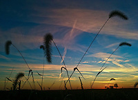 Farm house at sunset with contrails and clouds in sky.  iPhone photo. Manipulated with app.