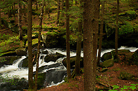 Alder Creek, Pharoah Lakes Wilderness Area, Adirondack Forest Preserve, New York