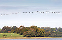 05/10/14 <br /> <br /> After the coldest night of the season so far and surrounded by autumn colour, a flock of Canada Geese (known as a skein) come in to land on Rudyard Lake, near Leek, Staffordshire. According to the The RSPB  190,000 Canada Geese overwinter in the UK each year with numbers usually first arriving in early October.<br /> <br /> <br /> All Rights Reserved: F Stop Press Ltd. +44(0)1335 300098   www.fstoppress.com.