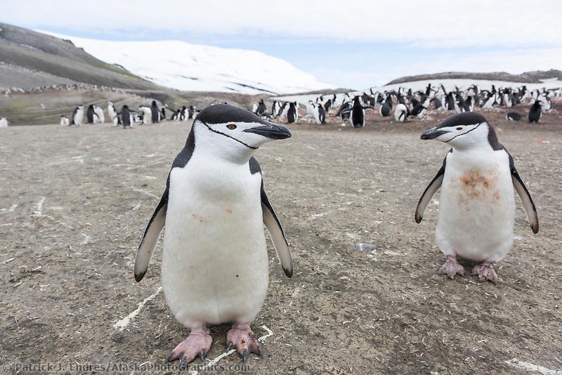 Bailey Head, Deception Island, Antarctic peninsula