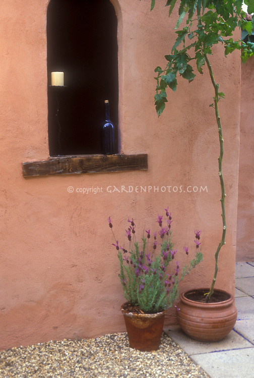 Spanish lavender herb Lavandula stoechas and tomato vine in terra cotta pot container garden next to pink salmon colored stucco wall, candles, window, blue glass, in Mediterranean Italian style patio garden