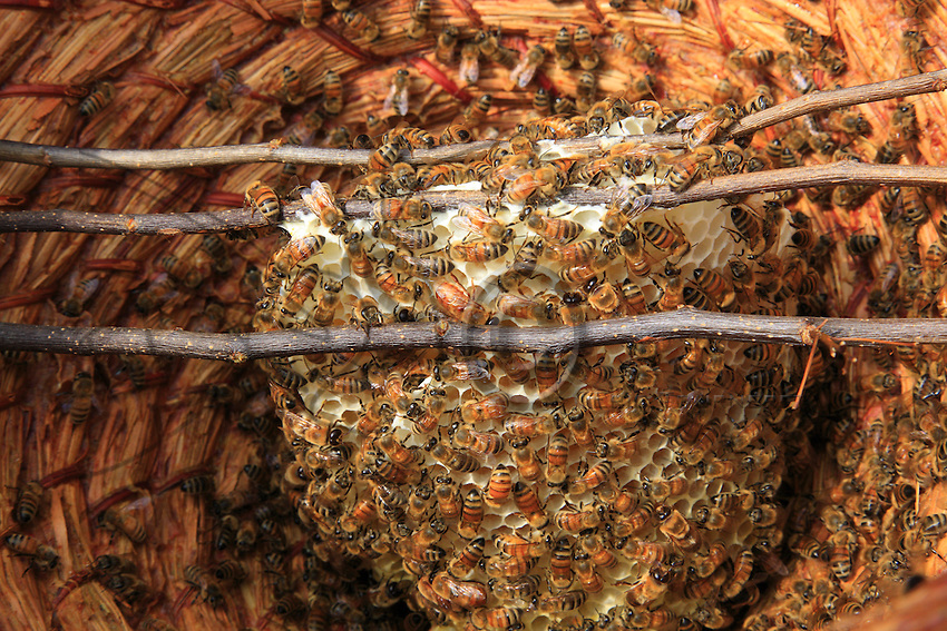 A circular basket as a hive.