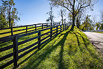 Strong Shadows Fall Forward Along A Backlit Fence Line And Country Lane During Autumn In Horse Country, Lexington Kentucky, USA