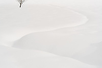 A minimalist snow scene