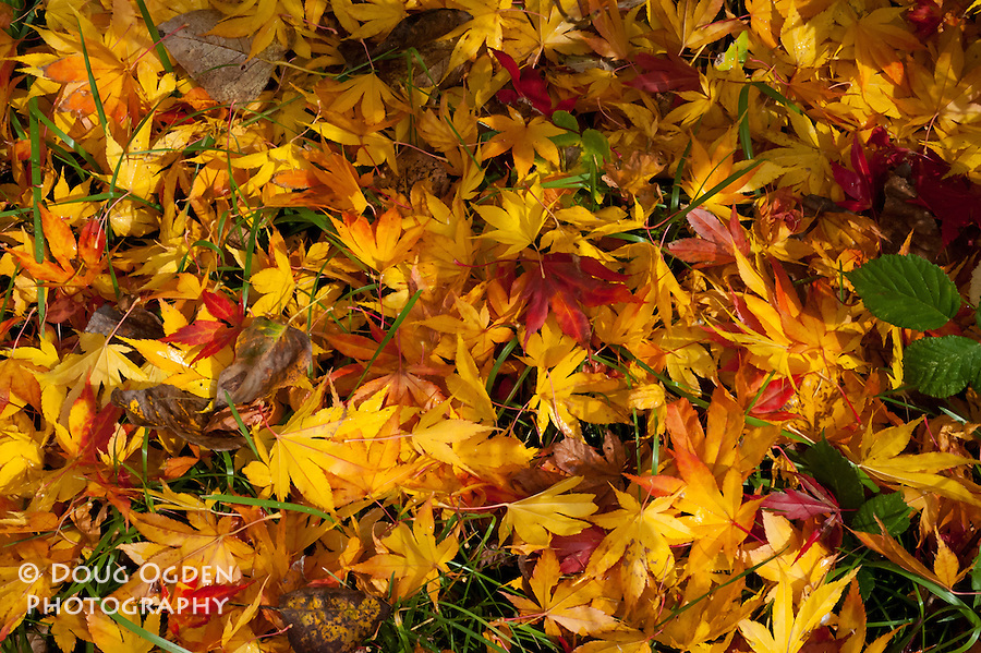 Red, yellow, and orange fallen leaves