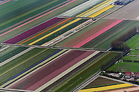Aerial view of flower field patterns surrounding Amsterdam, Holland
