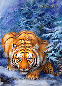 Kayomi, REALISTIC ANIMALS, paintings, tiger, WinterForest_M, USKH172,#A# realistische Tiere, realista, illustrations, pinturas