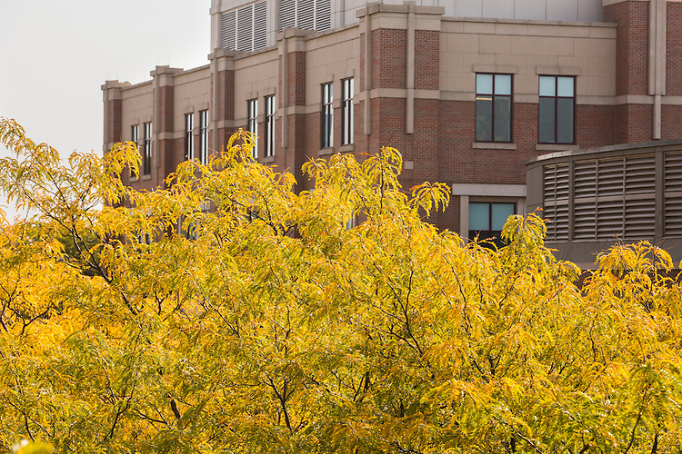 Fall foliage begins to appear on DePaul University's Lincoln Park Campus the week of  Oct. 1, 2014.  (DePaul University/Jamie Moncrief)