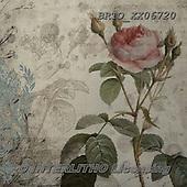 Alfredo, FLOWERS, BLUMEN, FLORES, paintings+++++,BRTOXX06720,#f# ,retro ,everyday