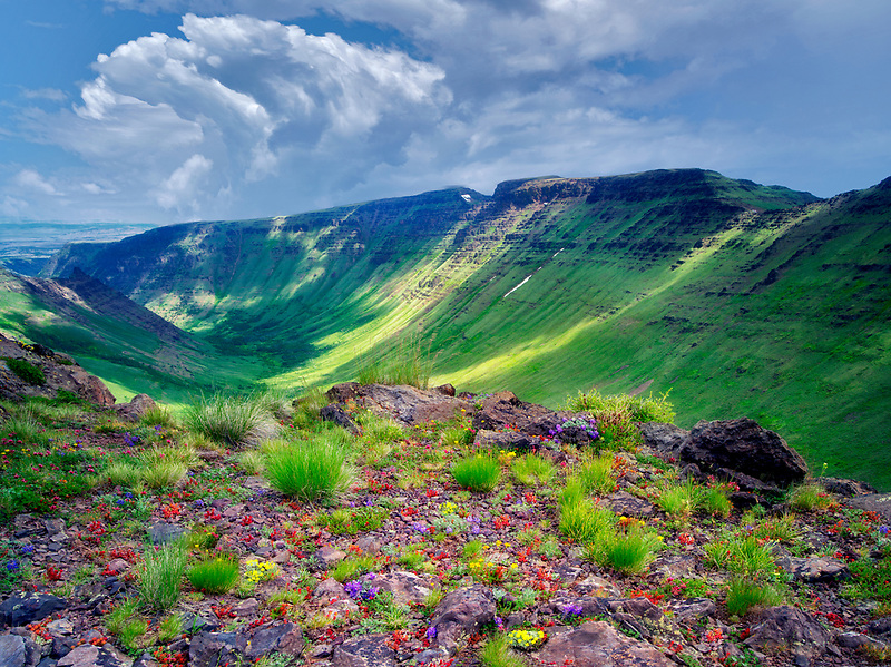 Mixed wildflowers and Keiger Gorge with clouds. Steens Mountain Wilderness, Oregon