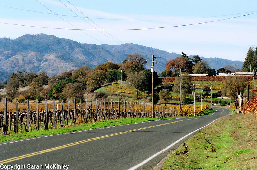 Clear fall light illuminates the changing colors of the vineyards along Old River Road between Ukiah and Hopland in Mendocino County in Northern California.