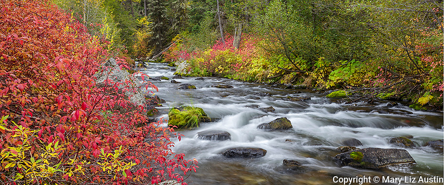 Gallatin National Forest, MT: Fall colors along Hyalite Creek