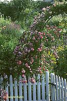 HD10-002x  Flower Garden - climbing roses on trellis - Dorothy Perking variety
