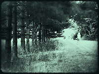 Walking at rural park with pine trees