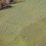 Spring planting west of Charlottesville Virginia helicopter aerial