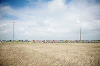 peloton plowing through the fields<br /> <br /> Druivenkoers 2014<br /> Huldenberg - Overijse (Belgium): 196km