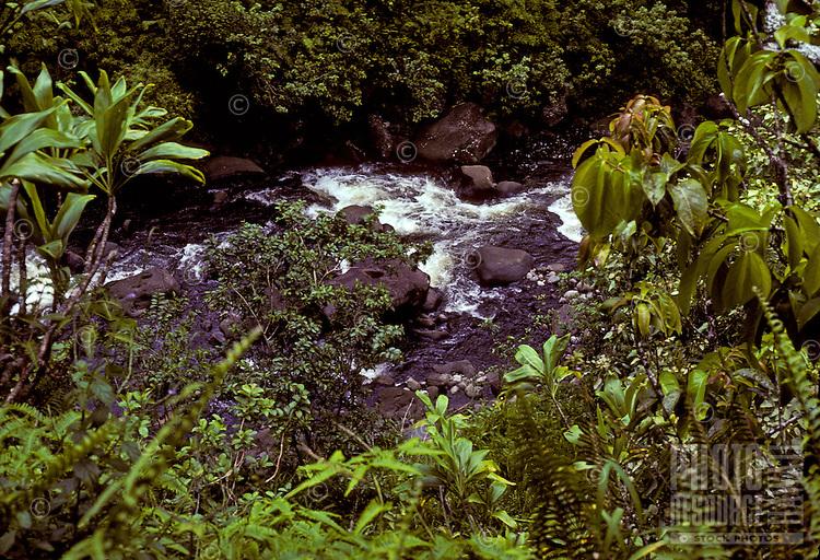 Wailau stream gushes through the rainforest on Molokai's pristine north shore.