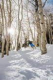 USA, Colorado, Aspen, skiing in the Aspen trees next to the Bear Paw run, Aspen Ski Resort, Ajax mountain