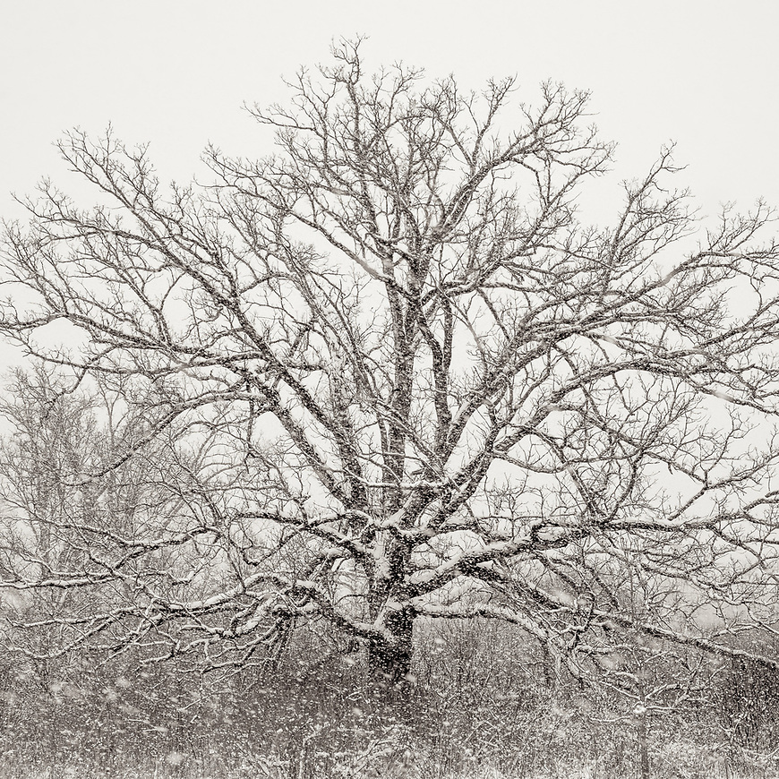 #blackandwhite #monochrome #winter #wisconsin @midwestmemoir #snow
