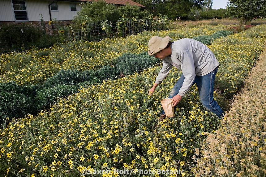Farmer harvesting flower seeds at Desert Canyon Ranch