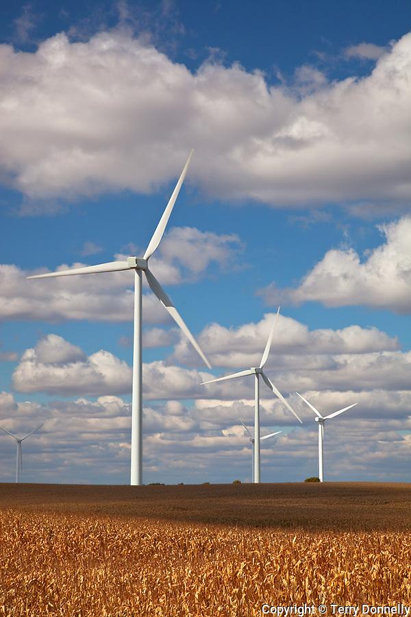 Bureau County, IL<br /> Wind mills in a field of drying corn on the Crescent Ridge windfarm, cumulus clouds, autumn