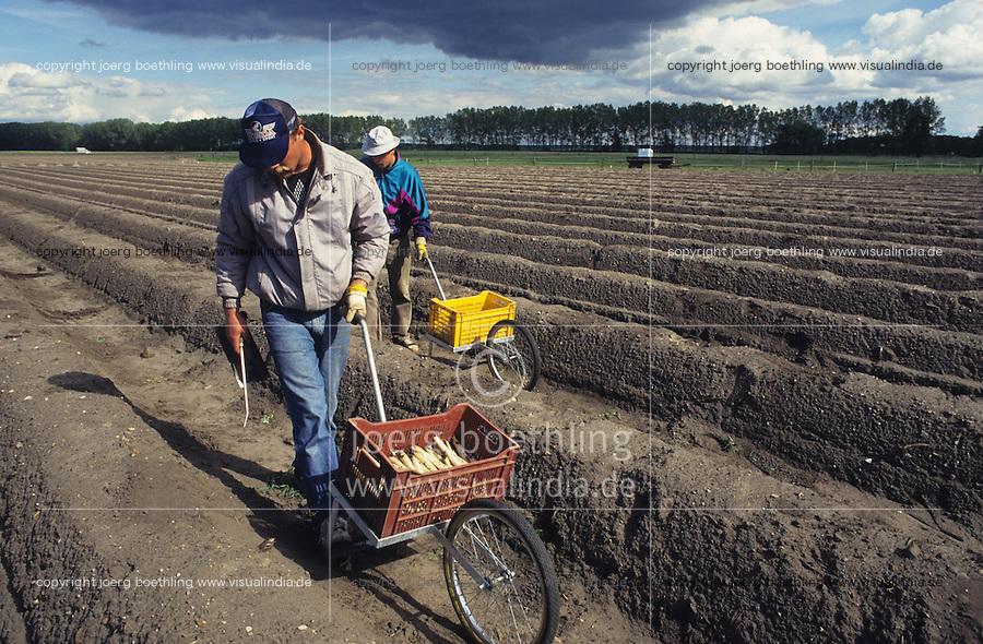 GERMANY,  polish saisonal labourer harvest asparagus in Beelitz near Berlin / DEUTSCHLAND, polnische Erntehelfer bei Spargelernte auf Hof Syring in Beelitz