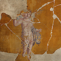 Fresco of an amorini or cherub, in the cubiculum of the Casa del Sacerdos Amandus, or House of the Priest Amandus, Pompeii, Italy. The fresco is in the Third Style of Roman wall painting, 20–10 BC, characterised by an ornamental elegance in figurative and colourful decoration. Pompeii is a Roman town which was destroyed and buried under 4-6 m of volcanic ash in the eruption of Mount Vesuvius in 79 AD. Buildings and artefacts were preserved in the ash and have been excavated and restored. Pompeii is listed as a UNESCO World Heritage Site. Picture by Manuel Cohen