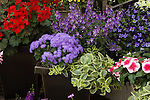 DISPLAY OF ANNUALS IN POTS BY SYNGENTA FLOWERS